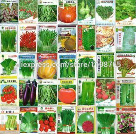 100pcs Vegetable Bonsai Plant  cucumber eggplant pepper pumpkin cabbage shallot carrot tomato potted balcony garden four seasons