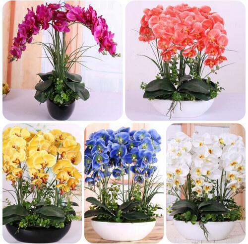 200pcs Phalaenopsis Orchid plants Bonsai Hydroponic Flower plants For Four Seasons Potted Plants * Jardin Garden Flores Sementes