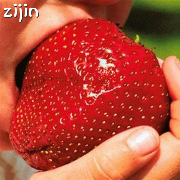 300pcs Giant strawberry bonsai Super big and Red Strawberry Fruit bonsai delicious plants gift for garden free shipping